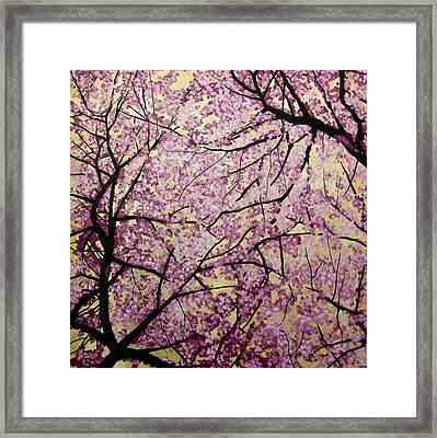 Cherry Blossoms Framed Print by Bobby Zeik