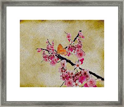 Cherry Blossoms Framed Print by Cheryl Young