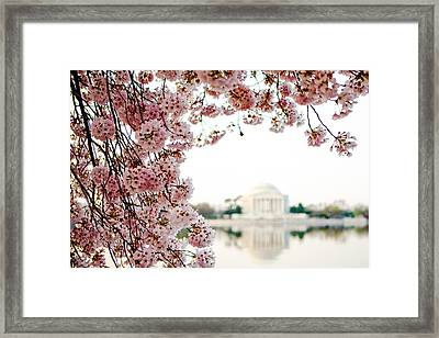 Cherry Blossoms Framing The Jefferson Memorial Framed Print by Susan  Schmitz