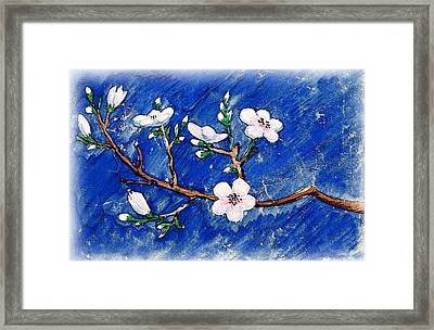 Cherry Blossoms Framed Print by Irina Sztukowski