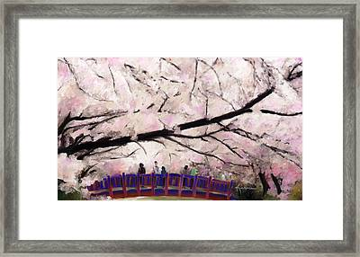 Cherry Blossoms Framed Print by Kume Bryant