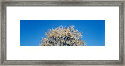 Cherry Blossoms, Switzerland Framed Print by Panoramic Images