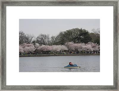 Cherry Blossoms - Washington Dc - 011314 Framed Print by DC Photographer