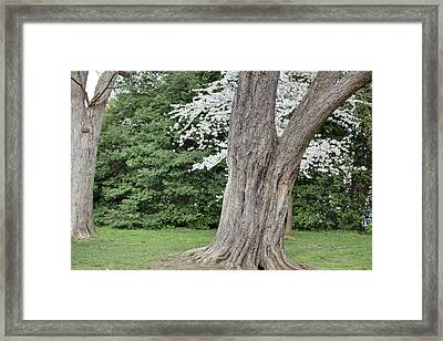 Cherry Blossoms - Washington Dc - 011351 Framed Print by DC Photographer