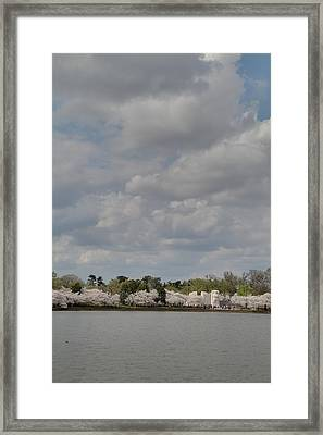 Cherry Blossoms - Washington Dc - 011366 Framed Print by DC Photographer
