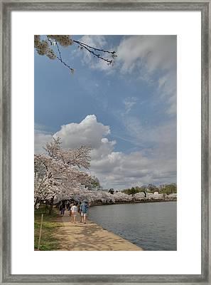 Cherry Blossoms - Washington Dc - 011370 Framed Print by DC Photographer