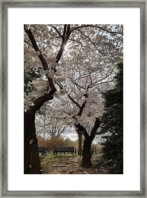 Cherry Blossoms - Washington Dc - 011373 Framed Print by DC Photographer