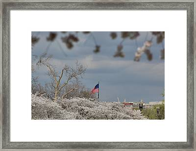 Cherry Blossoms - Washington Dc - 011381 Framed Print by DC Photographer