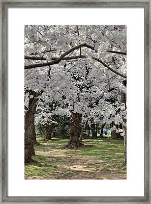 Cherry Blossoms - Washington Dc - 011384 Framed Print by DC Photographer