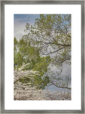 Cherry Blossoms - Washington Dc - 011389 Framed Print by DC Photographer