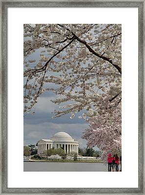 Cherry Blossoms With Jefferson Memorial - Washington Dc - 011315 Framed Print by DC Photographer