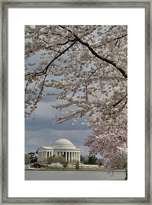 Cherry Blossoms With Jefferson Memorial - Washington Dc - 011316 Framed Print by DC Photographer