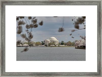 Cherry Blossoms With Jefferson Memorial - Washington Dc - 011318 Framed Print by DC Photographer