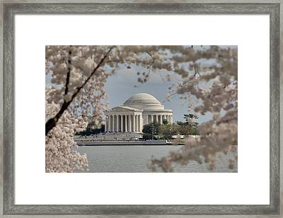 Cherry Blossoms With Jefferson Memorial - Washington Dc - 011324 Framed Print by DC Photographer