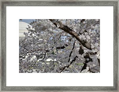 Cherry Blossoms With Jefferson Memorial - Washington Dc - 011333 Framed Print by DC Photographer