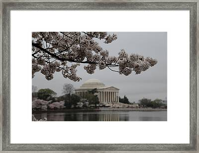 Cherry Blossoms With Jefferson Memorial - Washington Dc - 011345 Framed Print by DC Photographer
