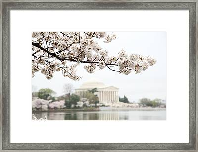 Cherry Blossoms With Jefferson Memorial - Washington Dc - 011346 Framed Print by DC Photographer