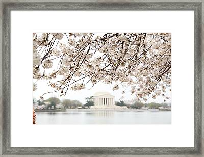 Cherry Blossoms With Jefferson Memorial - Washington Dc - 011348 Framed Print by DC Photographer