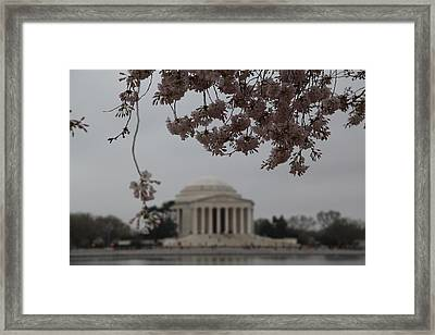 Cherry Blossoms With Jefferson Memorial - Washington Dc - 011349 Framed Print by DC Photographer