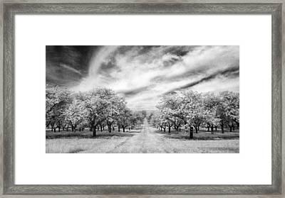 Cherry Grove At Seaqust Framed Print by Stephen Mack