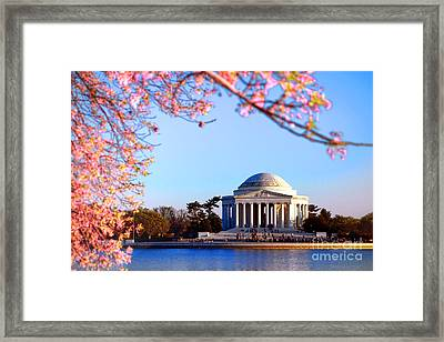 Cherry Jefferson Framed Print by Olivier Le Queinec