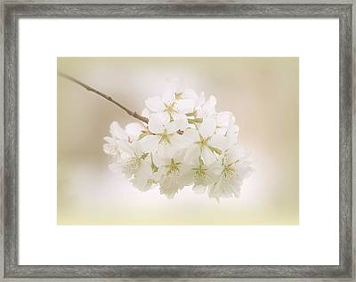 Cherry Tree Blossoms Framed Print by Sandy Keeton