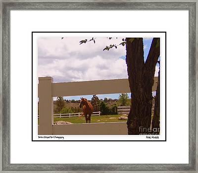 Chestnut Beauty Framed Print by Bobbee Rickard