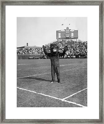 Chicago Bears Mascot In Front Of Wrigley Field Scoreboard Framed Print by Retro Images Archive