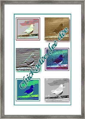 Chickadee Framed Print by Becky Sterling