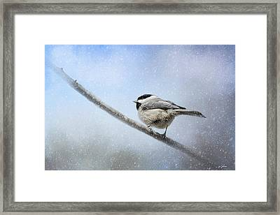 Chickadee In The Snow Framed Print by Jai Johnson