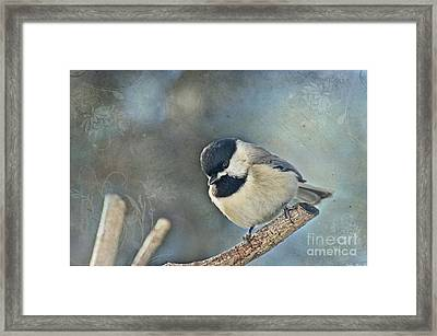 Chickadee With Texture Framed Print by Debbie Portwood