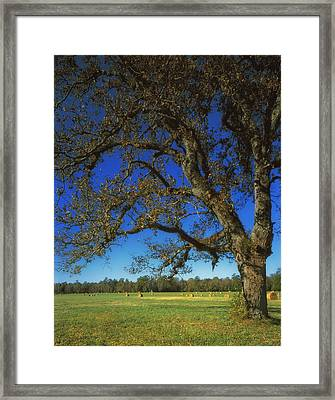 Chickamauga Battlefield Framed Print by Mountain Dreams