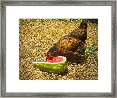 Chicken And Her Watermelon Framed Print by Sandi OReilly