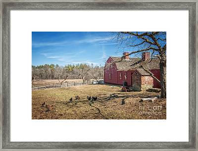 Chickens In The Yard Framed Print by Scott Thorp