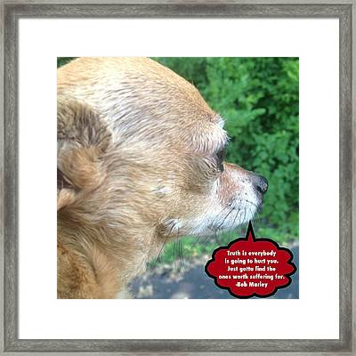 Chihuahua Deep Thoughts Framed Print by Lisa Piper Menkin Stegeman