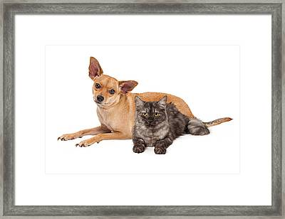 Chihuahua Dog And Gray Cat Framed Print by Susan Schmitz