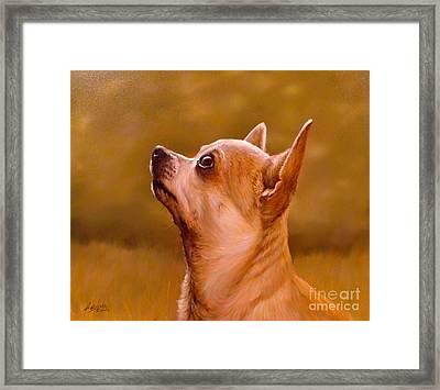 Chihuahua Portrait Framed Print by John Silver