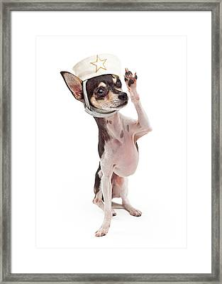 Chihuahua Sailor Dog Saluting Framed Print by Susan  Schmitz