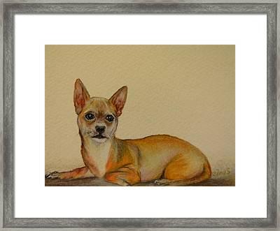 Chihuahua Framed Print by Zina Stromberg