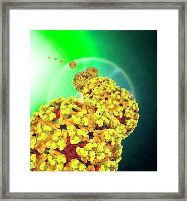 Chikungunya Virus Framed Print by Ramon Andrade 3dciencia