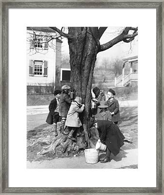 Children Tapping Maple Trees Framed Print by Underwood Archives