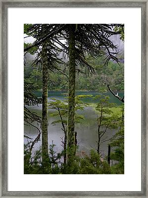 Chile South America Temperate Framed Print by Scott T. Smith