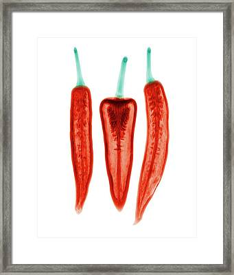 Chilli Peppers Framed Print by Brendan Fitzpatrick