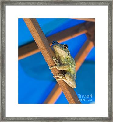 Chillin By The Pool Framed Print by Michelle Wiarda