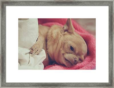 Chillin Framed Print by Laurie Search