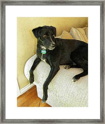 Chillin On The Couch Framed Print by Paul Gioacchini