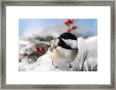 Chilly Chickadee Framed Print by Christina Rollo