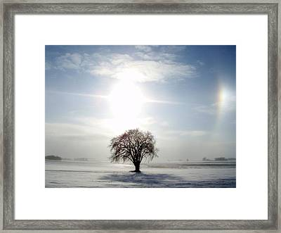 Chilly Dog Framed Print by James Peterson