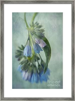 Chiming Bells Part I Framed Print by Priska Wettstein