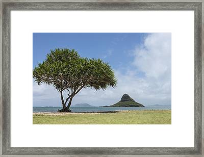 Chinamans Hat With Tree - Oahu Hawaii Framed Print by Brian Harig